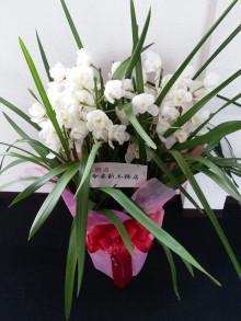 祝い花続々!!